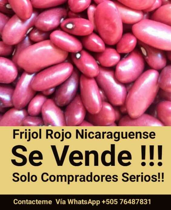Frijol rojo nicaraguense para exportacion